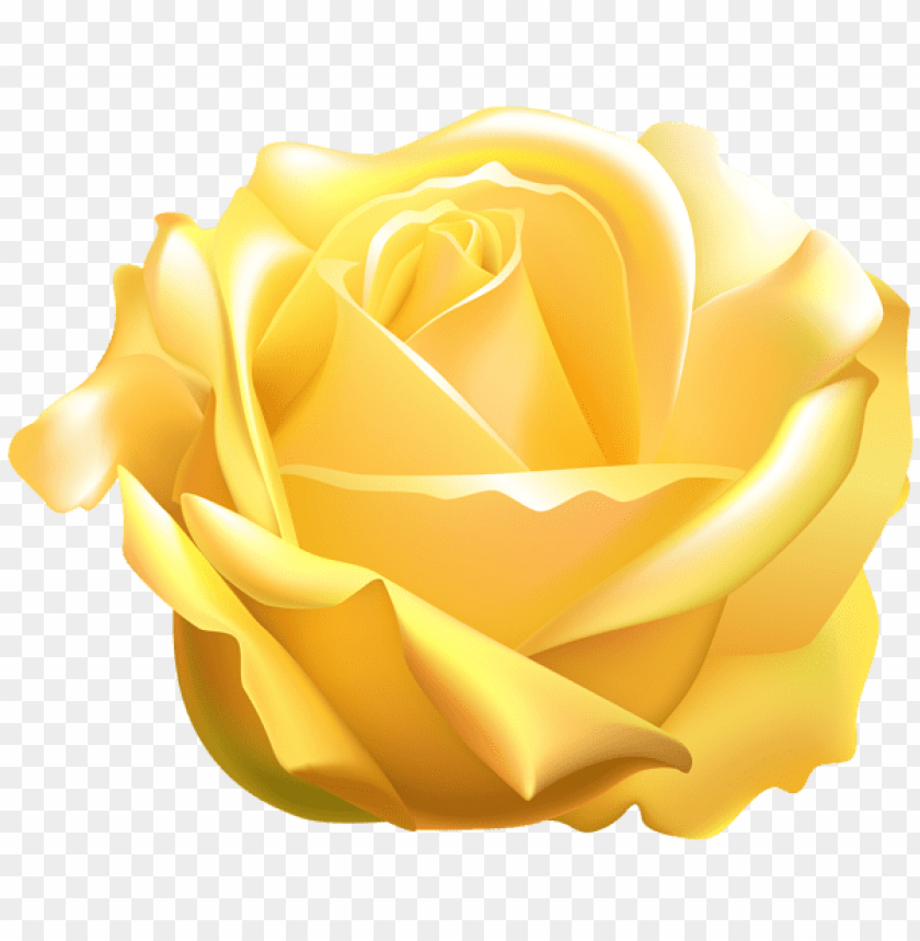Download Yellow Rose Png Images Background Toppng