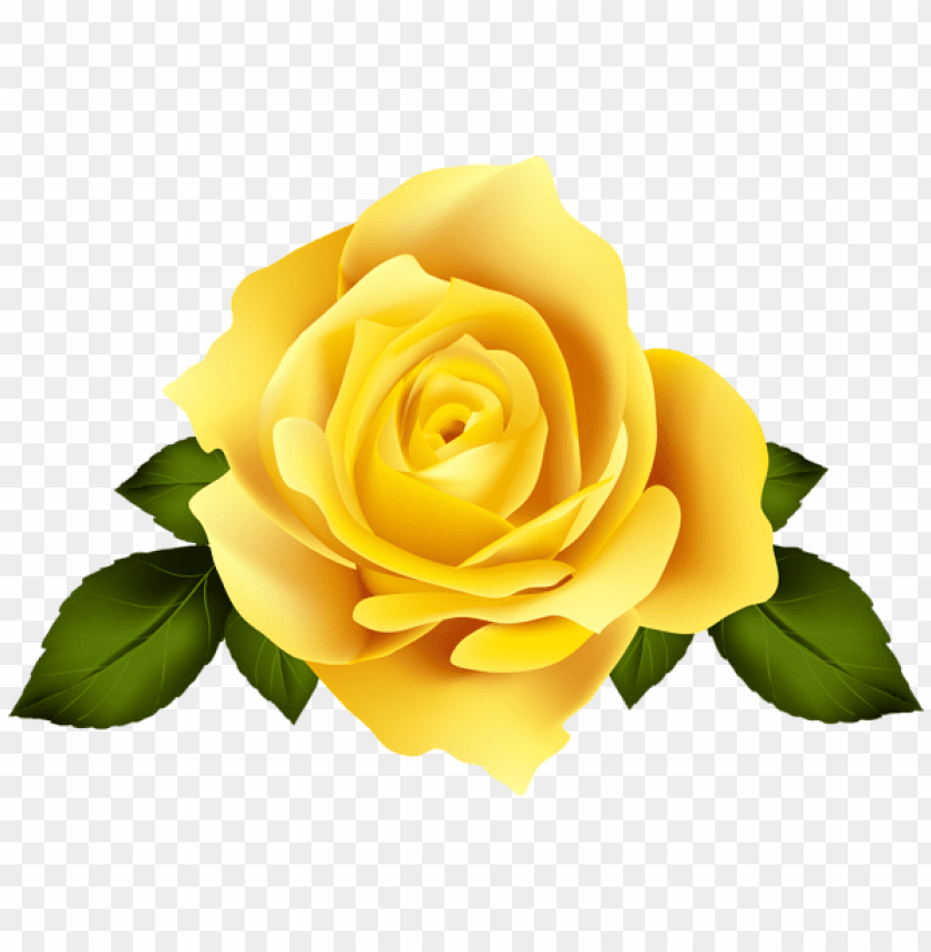 Download Yellow Rose Flower Png Images Background Toppng