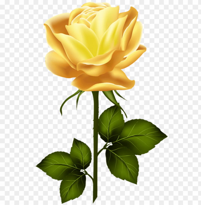 Download Yellow Rose With Stem Png Png Images Background Toppng