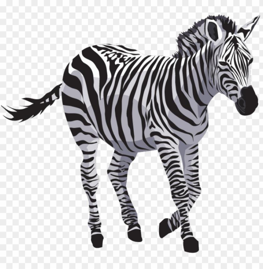 Download Zebra Png Images Background