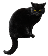 black cat png file