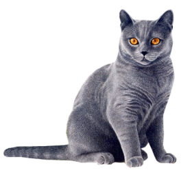 black cat yellow eyes png