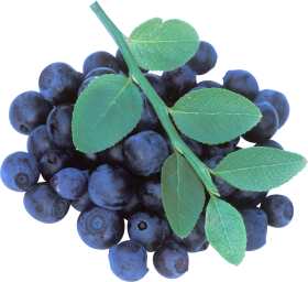 blueberrys with leaves
