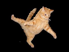 cat jump png