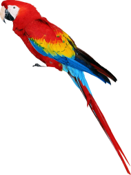 colorful parrot standing