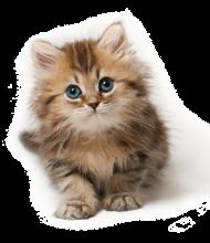 cute cat png