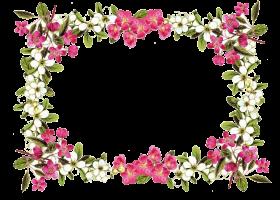 flowers borders