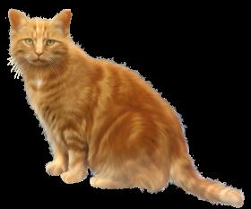 golden cat png
