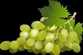 green grapes clip art png