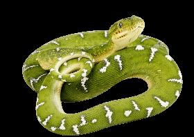green snake twirling