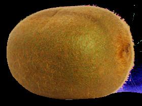 kiwi fruit png file