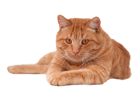 red cat png
