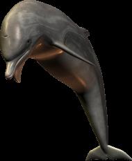 silver bottlenose dolphin jumping