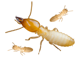 termite png background image
