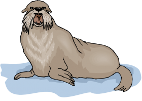 walrus background png