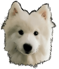 Download 67 Why Are You A Samoyed Samoyed Do Png Free Png Images Toppng
