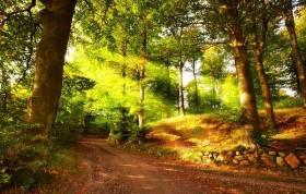 autumn forest PNG images transparent