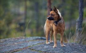 background, dog, nature wallpaper PNG images transparent
