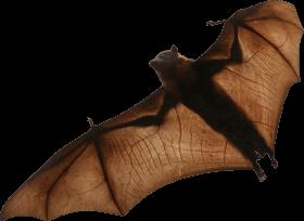 bat PNG images transparent
