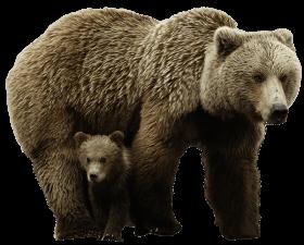 bear PNG images transparent
