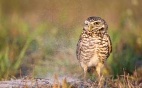 bird, owl, predator wallpaper PNG images transparent