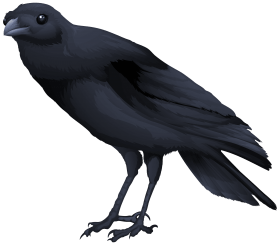 birds PNG images transparent