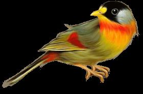 birds PNG images transparent