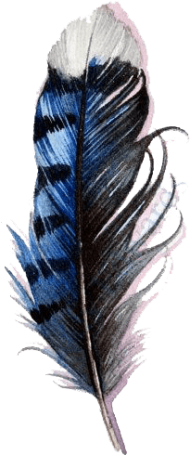 Download blue jay feather watercolor png - Free PNG Images | TOPpng