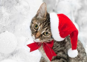 bow, cat, hat, holiday, winter wallpaper PNG images transparent