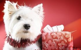 box, dog, muzzle wallpaper PNG images transparent