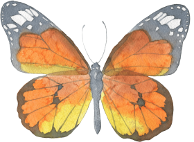 brown butterfly watercolor transparent decorative pattern - butterfly watercolor PNG images transparent