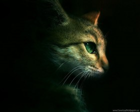 cat, eyes, muzzle, shadow wallpaper PNG images transparent
