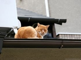 cat, lying, roof, winking wallpaper PNG images transparent