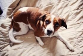 comfort, dog, home wallpaper PNG images transparent