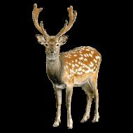 deer PNG images transparent