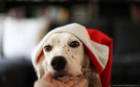 dog, eyes, hat wallpaper PNG images transparent