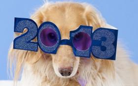 dog, fluffy, glasses, happy wallpaper PNG images transparent