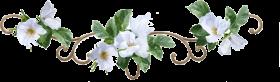 flower border png - white flower border PNG images transparent