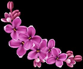 flowers PNG images transparent