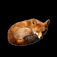 fox PNG images transparent