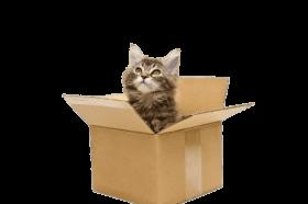 Cat In Cardboard Box PNG images transparent
