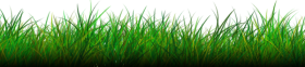 grass PNG images transparent