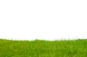 grass free download png PNG images transparent