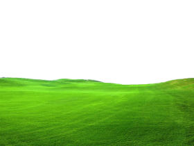 grass png pic PNG images transparent