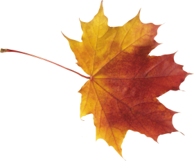 red leaves PNG images transparent