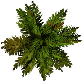 Tree Top Png File - Palm Top View Png Image With ...