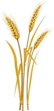 wheat PNG images transparent