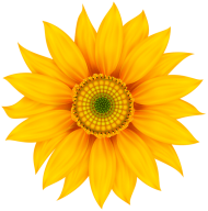 yellow flower transparent PNG images transparent