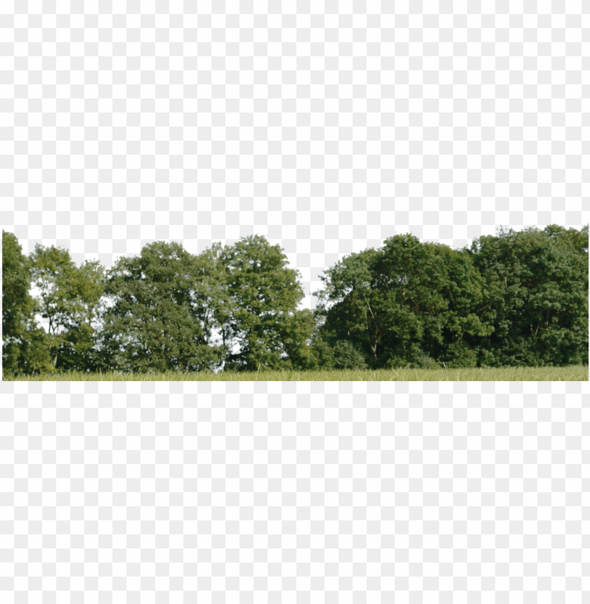 free PNG 0 tree background wallpaper tree for background png - group of trees PNG image with transparent background PNG images transparent