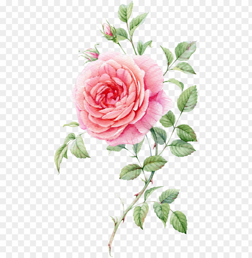free PNG 0℃素材1 blooming rose, watercolor flowers, watercolour - watercolor roses PNG image with transparent background PNG images transparent
